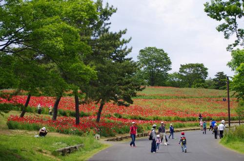 昭和記念公園201305-1