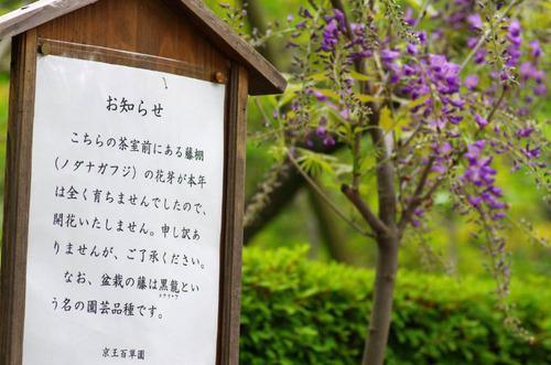 京王百草園201204-6