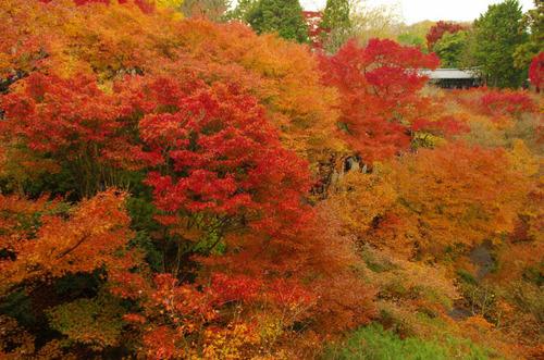 京都東福寺201211-3