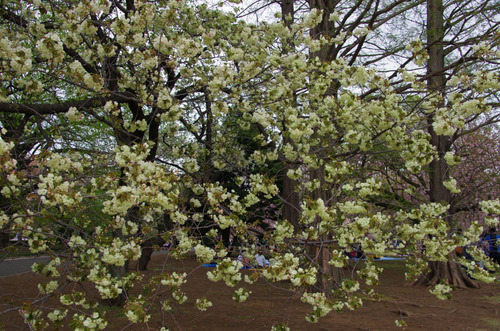 新宿御苑201104-14