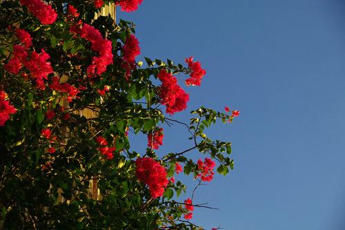 石垣島の夕暮れ201008-8