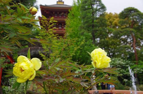 高幡不動201105-5