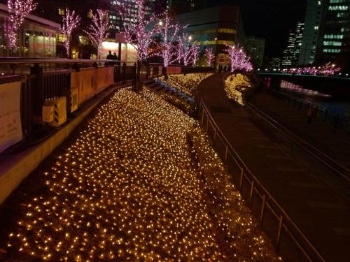 目黒川冬の桜201112-1