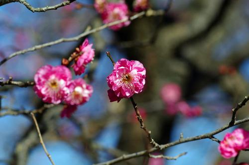 京王百草園201101-7