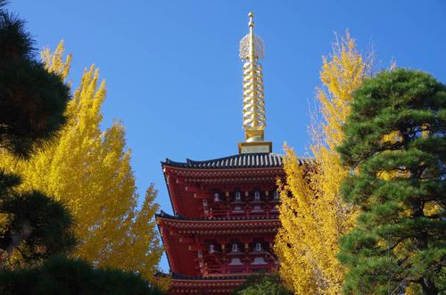高幡不動201411-13