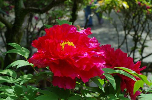 京王百草園201105-9