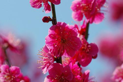 昭和記念公園201203-5