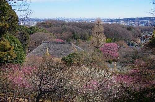 京王百草園201101-9