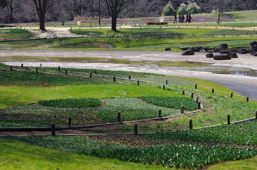 昭和記念公園201103-9