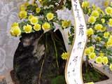 菊まつり受賞-10