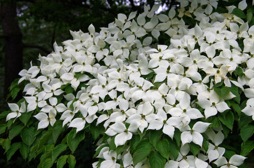 昭和記念公園201106-3