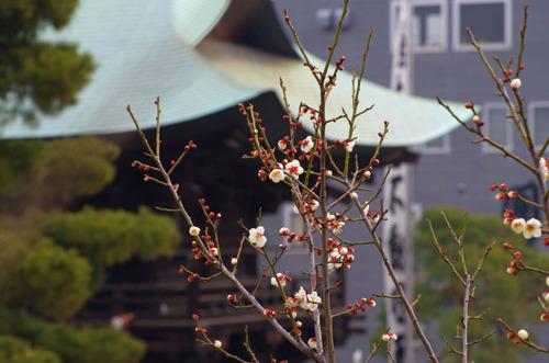 高幡不動尊20110206-5