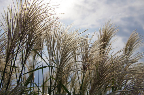 昭和記念公園201110-13