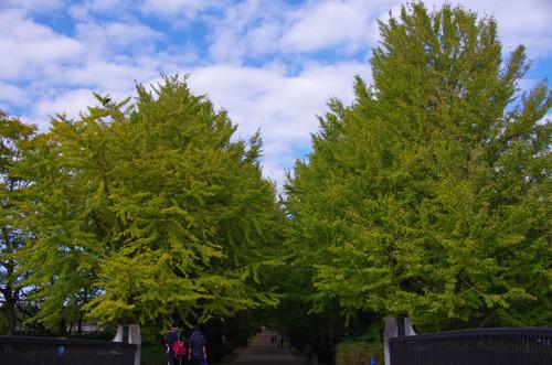 昭和記念公園201211-10