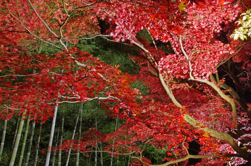 京王百草園201411-7