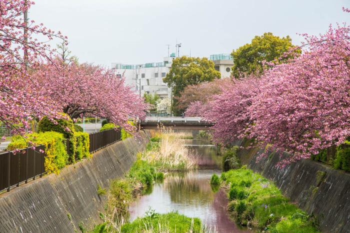 近所の春201804