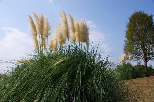 昭和記念公園201110-7