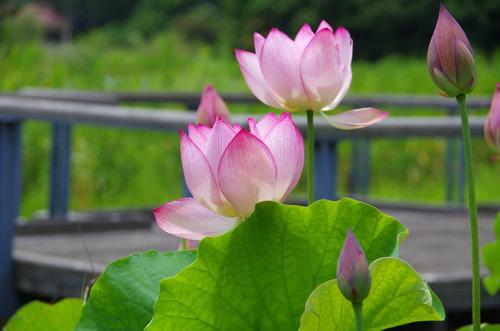昭和記念公園201207-1