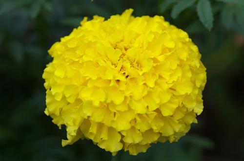 昭和記念公園201208-8