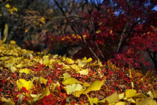 百草園の紅葉-7