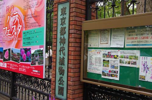 神代植物園2011-15