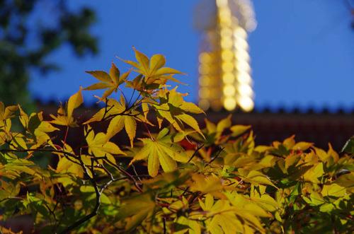 高幡不動201110-9