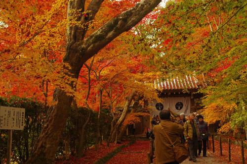 京都201211-15