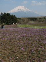 富士芝桜富士山2