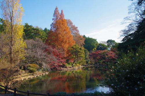 新宿御苑201312-2