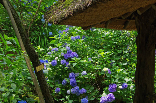 京王百草園201206-14