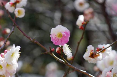 高幡不動尊201203-18