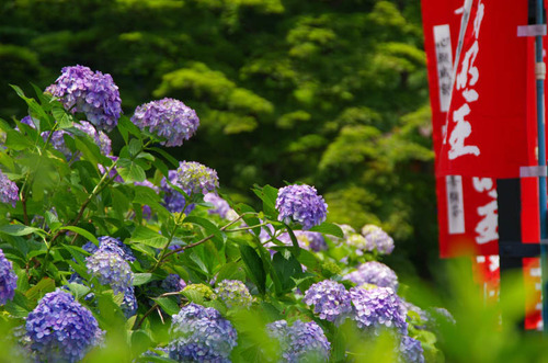 高幡不動201206-12