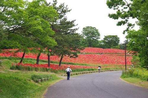昭和記念公園201405-6