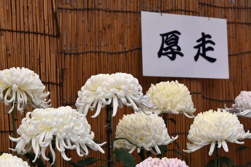 高幡不動尊201511-7