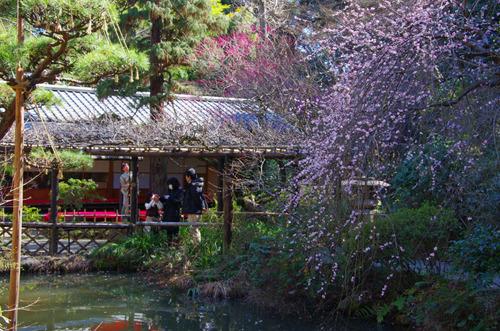 京王百草園201103-3