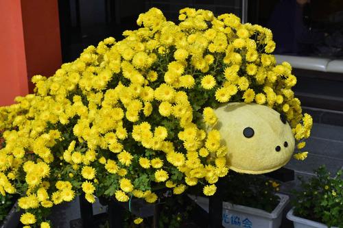 菊まつり2015
