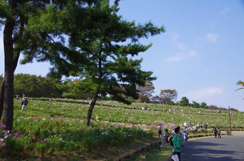 昭和記念公園201110-6