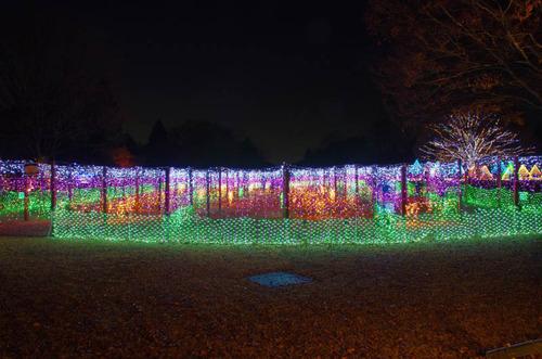 昭和記念公園201312-2