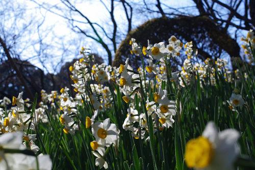 百草園の梅2010-3