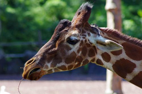 多摩動物公園201109-5