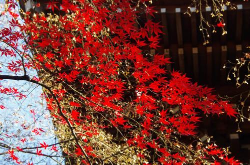高幡不動201112-6