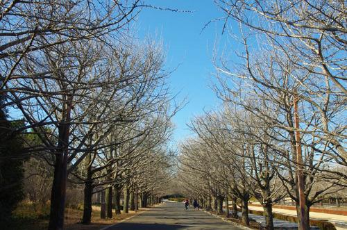 昭和記念公園201501-6