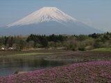 富士芝桜富士山3