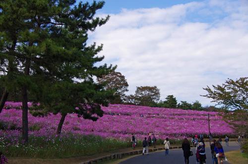 昭和記念公園201211-6