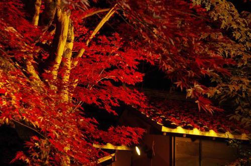 百草園紅葉ライトアップ201211-4