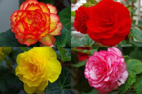 神代植物園2011-11