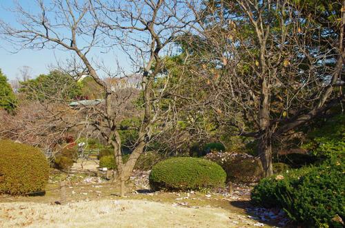 新宿御苑201312-1