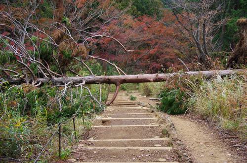 高尾山201111-9