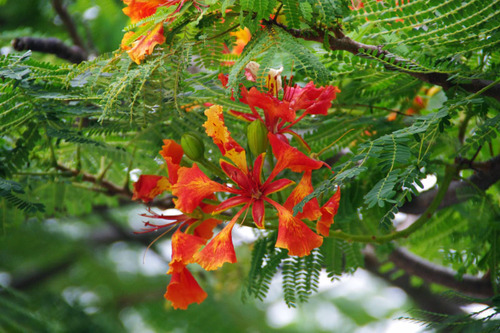 石垣島201008-4