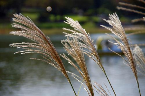 昭和記念公園201110-5